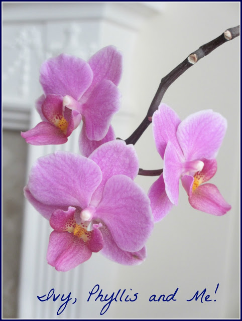 Blog Orchid 3 01