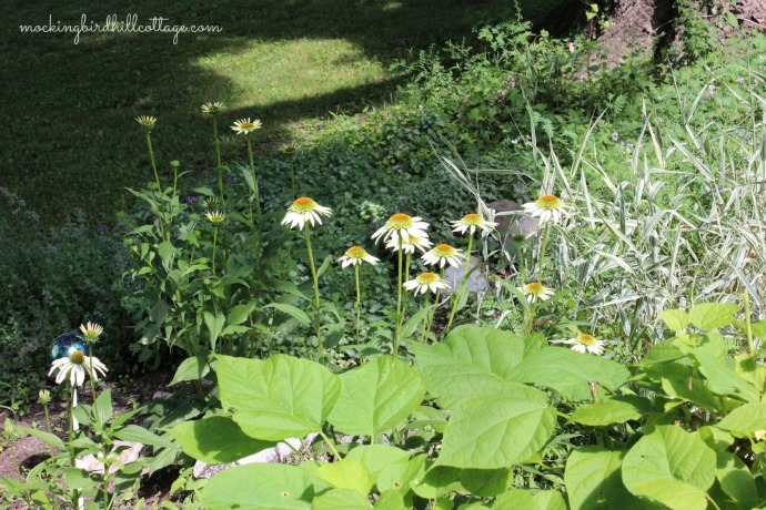 whiteconeflowers