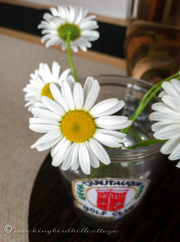 Sunday Cottage daisies