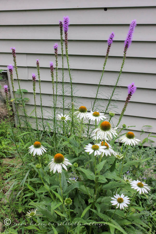 monday - liatris & coneflowers