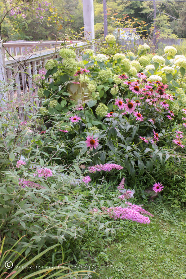 W - butterfly bush& hydrangeas
