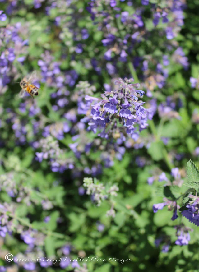 6-2 beeandcatmint