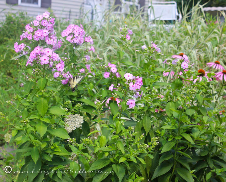 7-30 butterflyinflowers