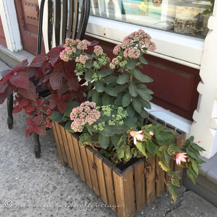9-6 bookstoreplanter