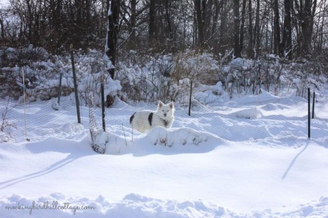snowscoutcorral