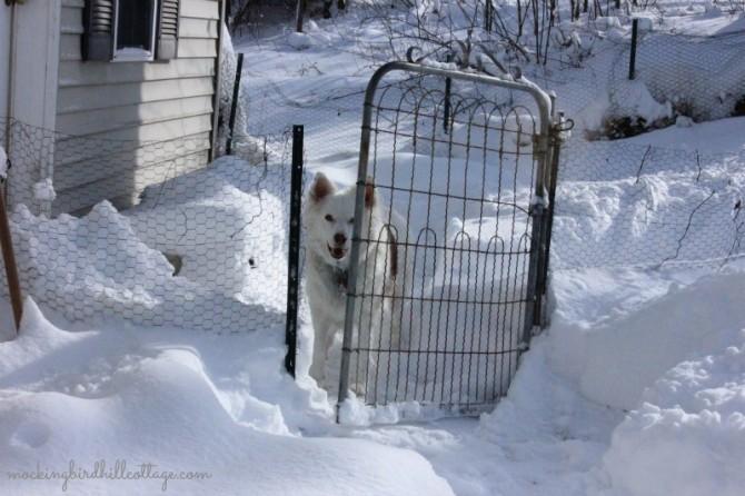 snowscoutgate