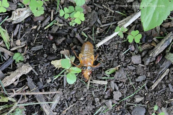 cicadainexoskeleton