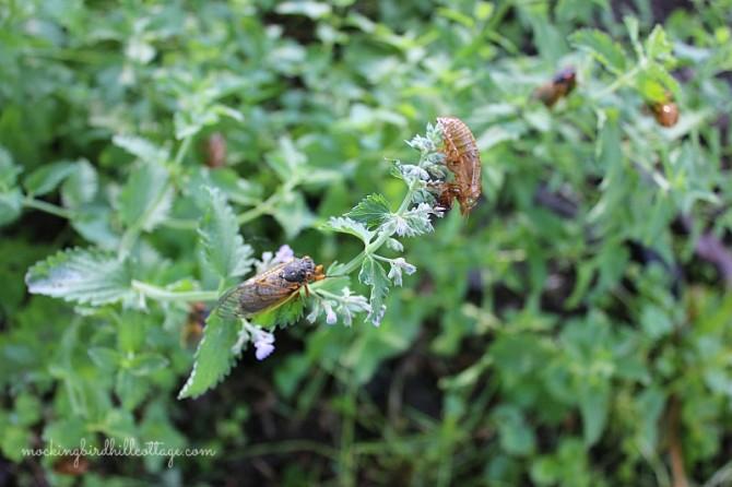 cicadas1withexo