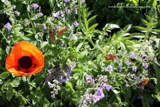 cicadaswithcat&poppy