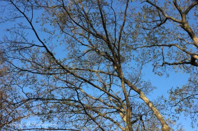 scenesmapletree