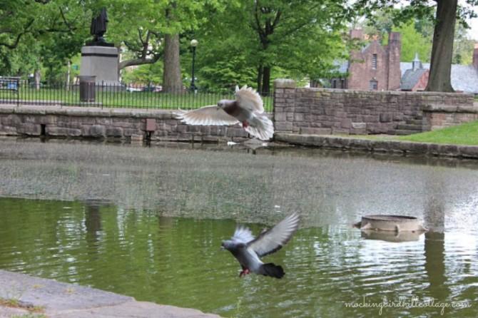 twopigeonsflying