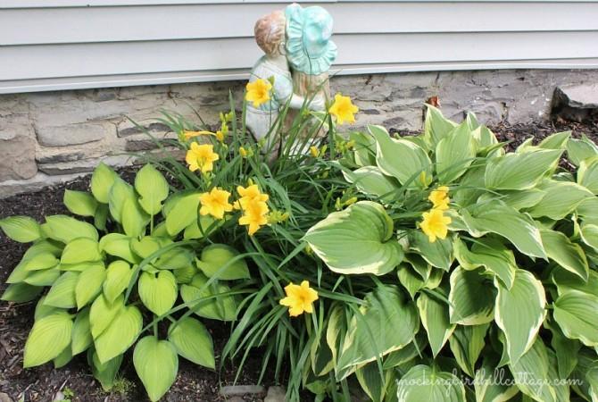 Thurs-daylilies