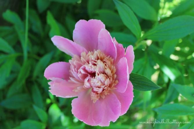 pinkbeauty