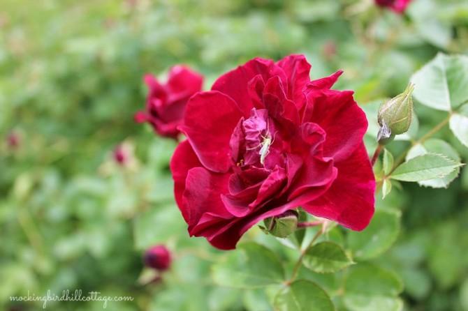 roseandcritter