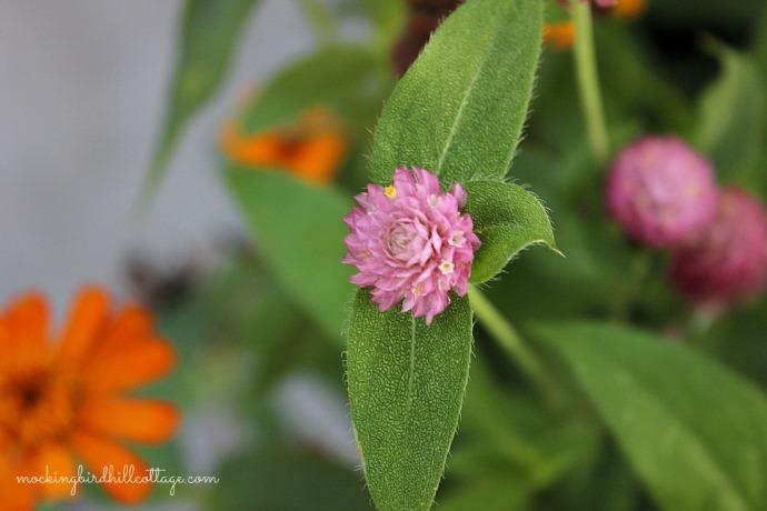 pinkbloom