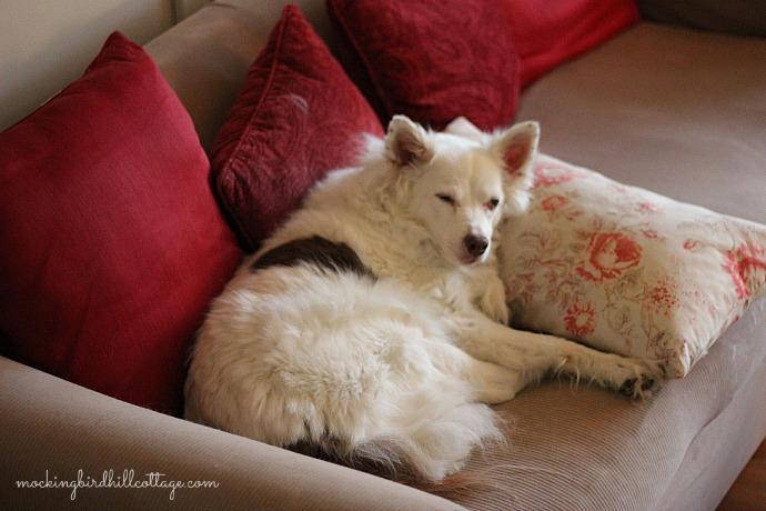 sleepyscout