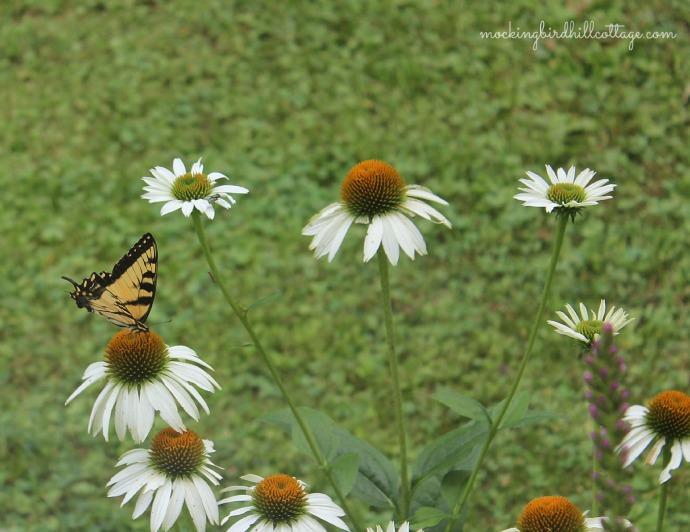 swallowtailwhitecone