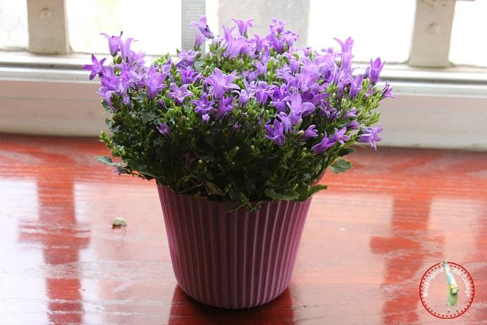 tuespurpleflowers