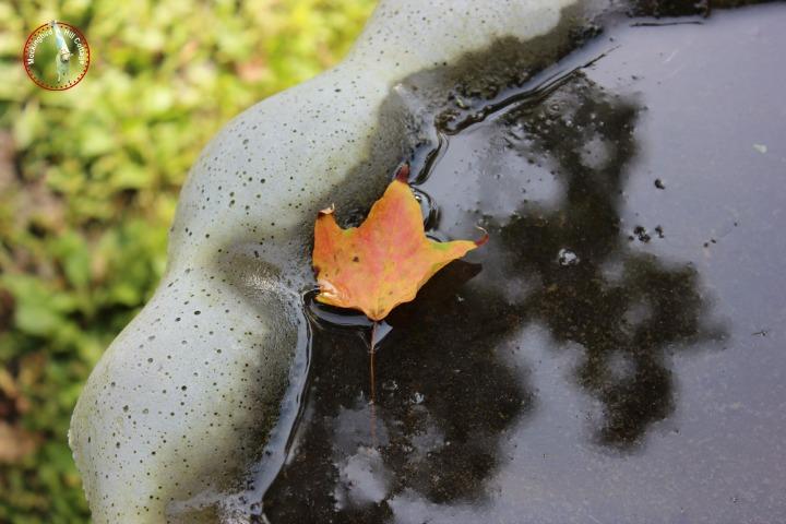 leafinbirdbath