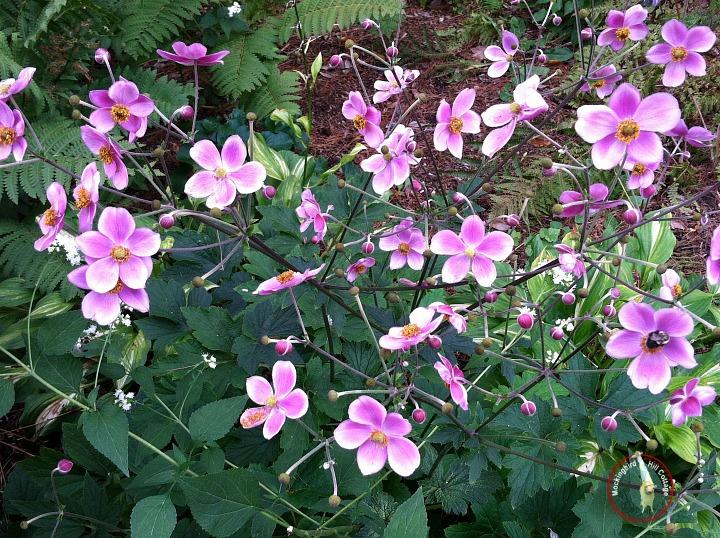 hartflowers