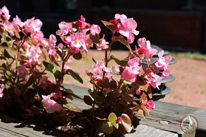 hartpinkflowers