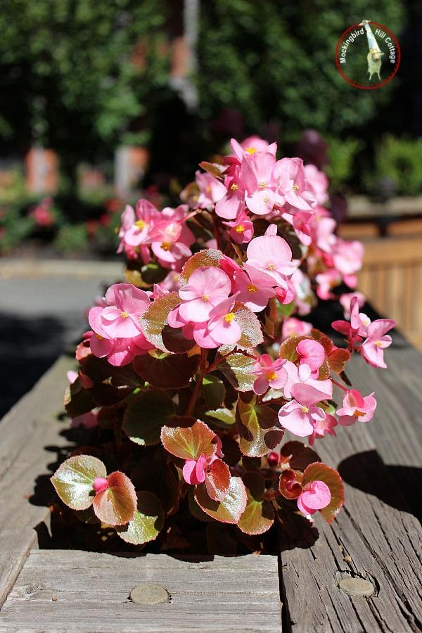 hartpinkflowersvertical