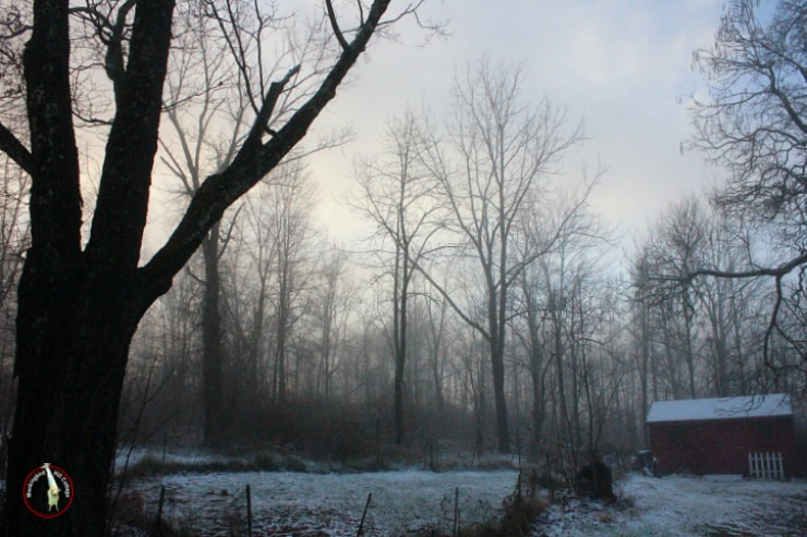 foggy snowy morning