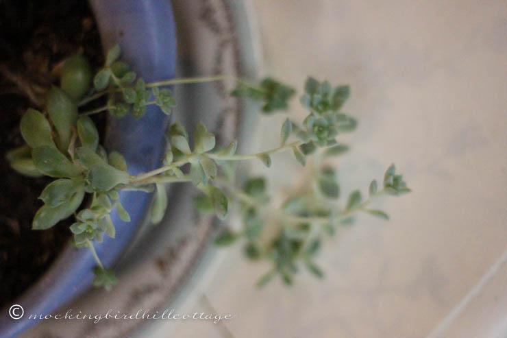 rileysucculent