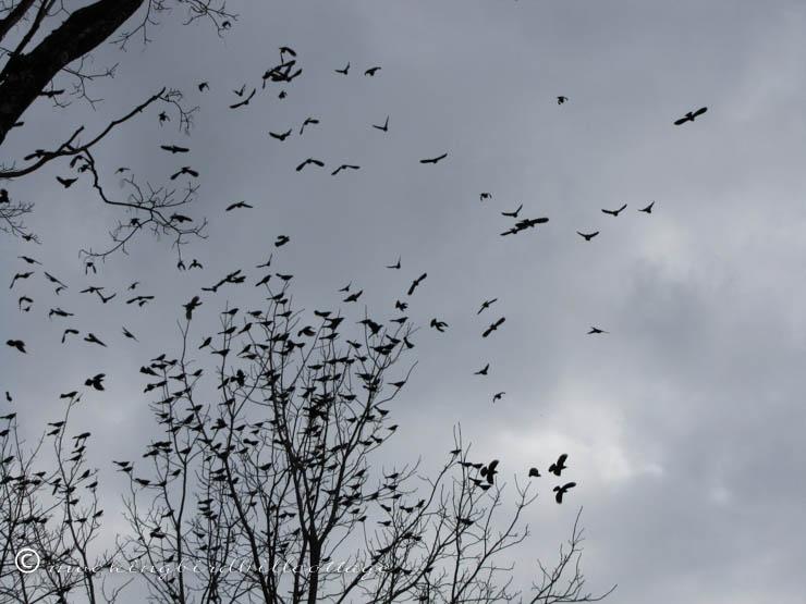 thebirds3