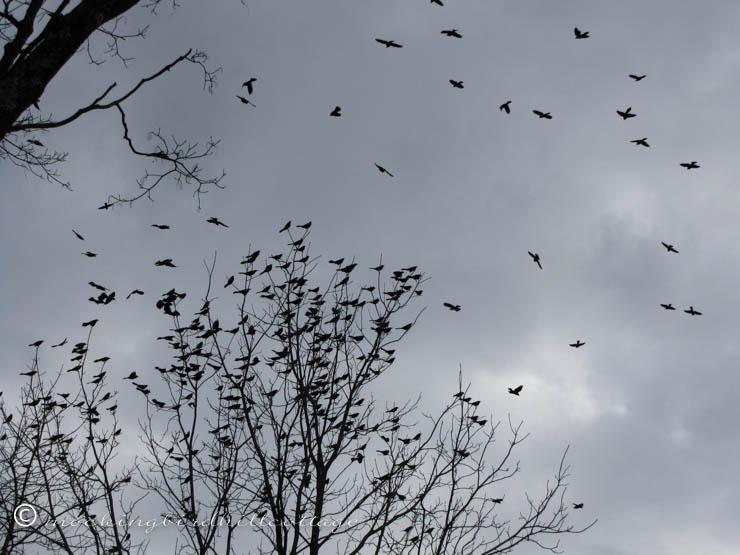 thebirds4