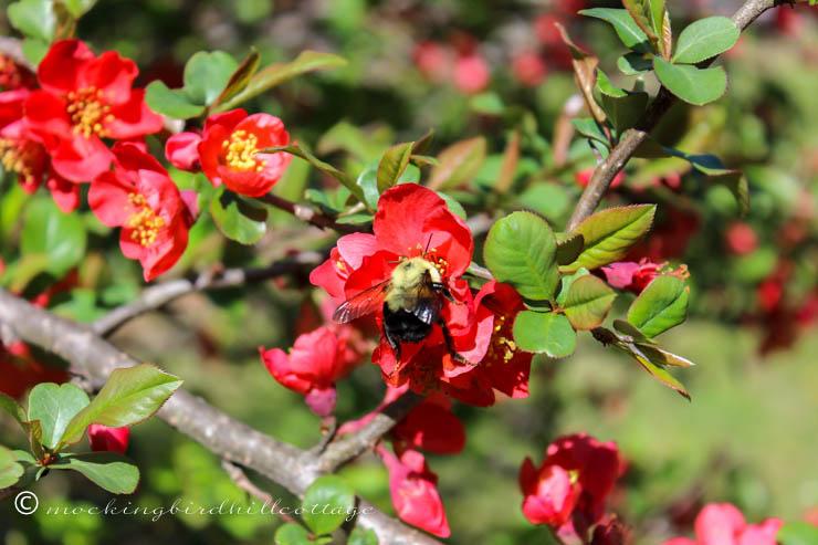 Wbumblebee1