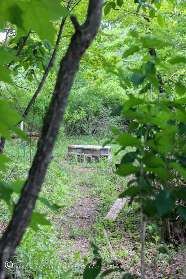 abenchinourwoods
