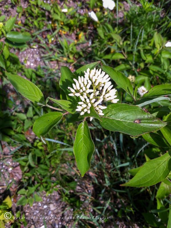 Chau-wildflowers2