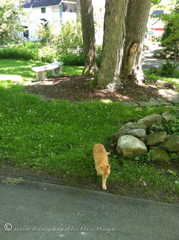 chaut-cat2