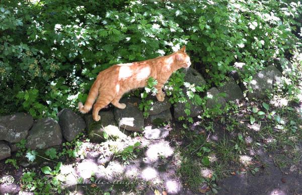 chaut-cat3