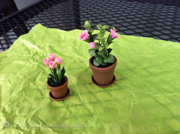 chautauqua-miniatures-pottedplants