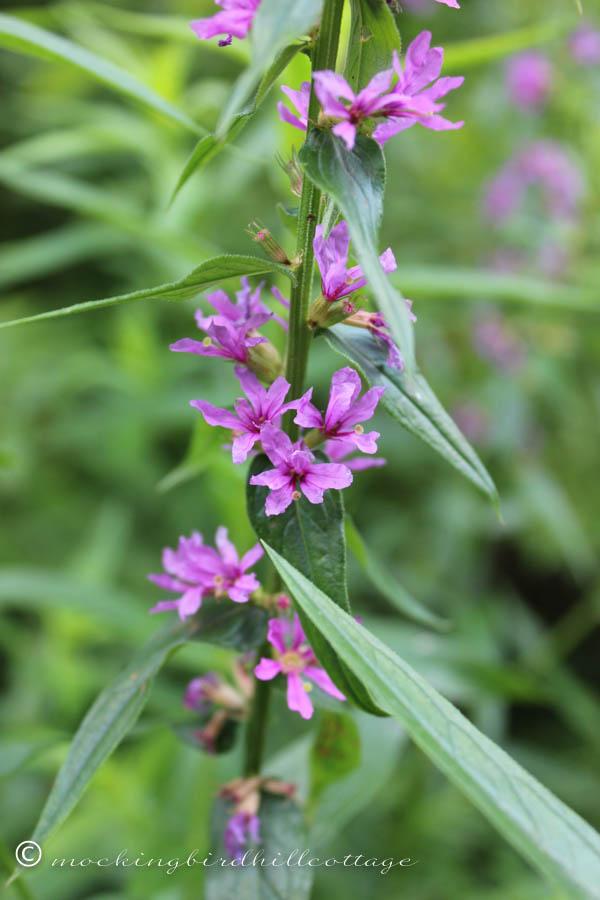 saturday-purple flowers