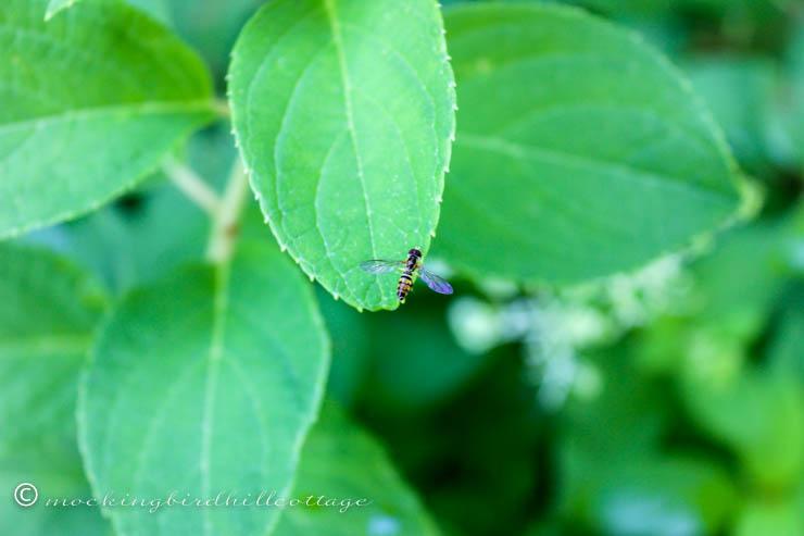 tiny tiny bee
