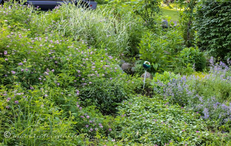 tuesday-garden