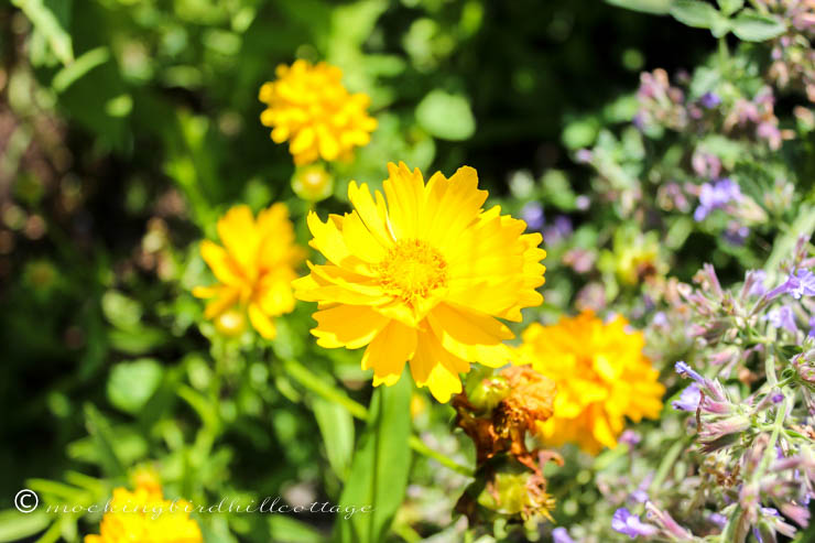 yellow flowers on friday