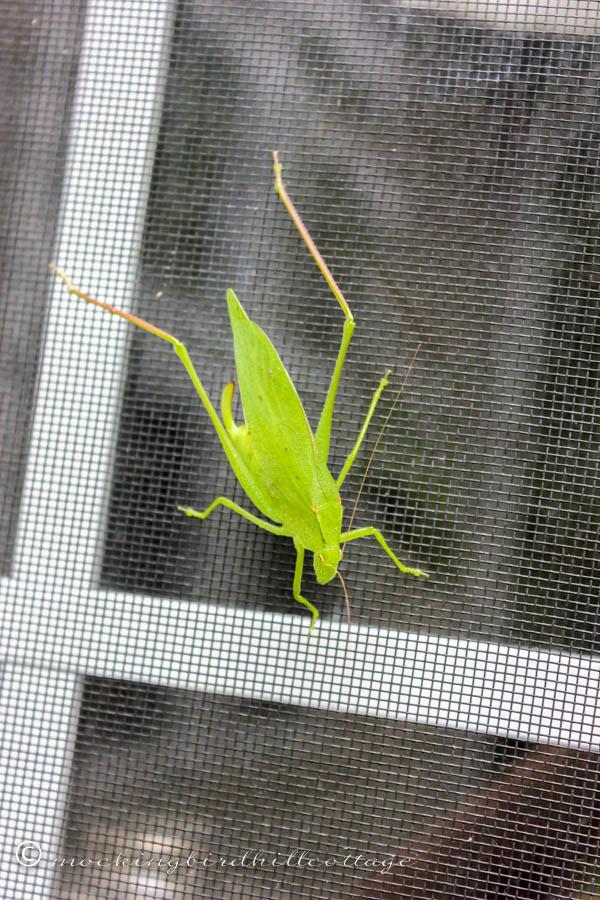 W - green critter