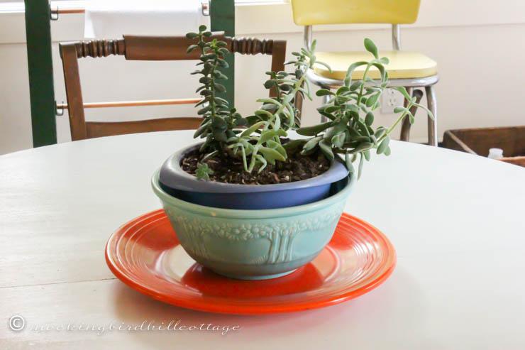 rileys dish garden 1