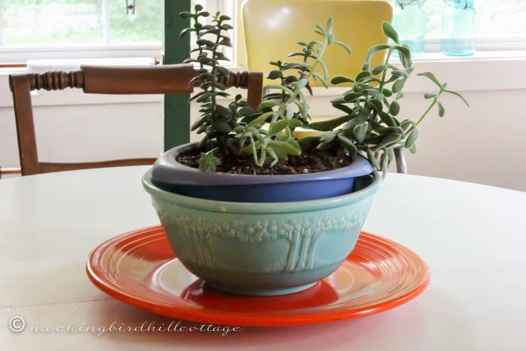 rileys dish garden 2