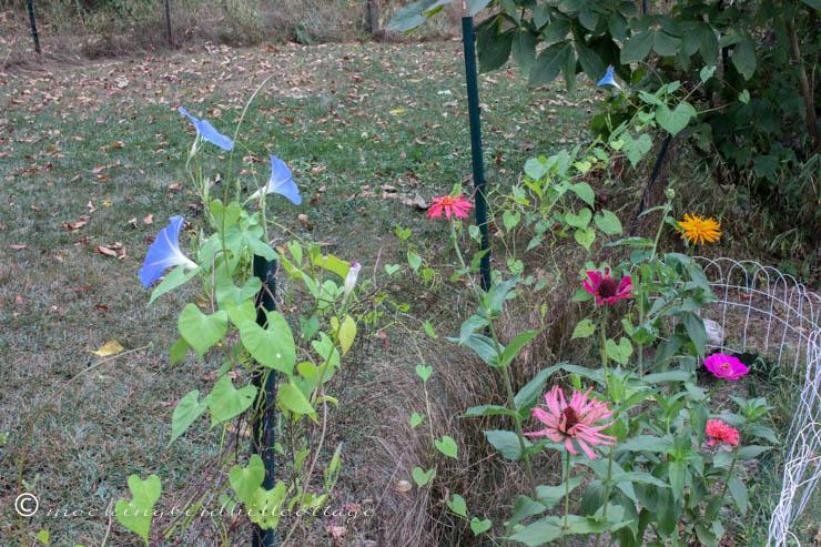 garden and fallen leaves