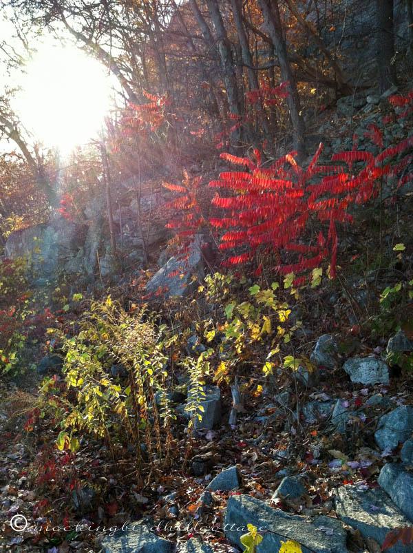 Fall hike 2