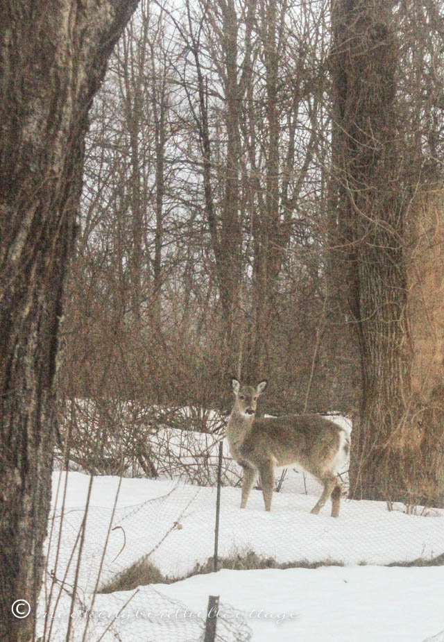 3-20 deer watching Scout