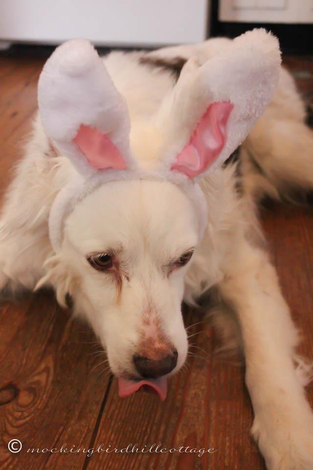 4-5 Scoutie Bunny 2