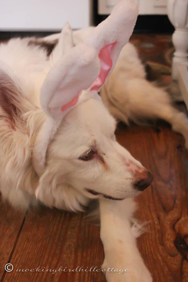 4-5 Scoutie Bunny 3