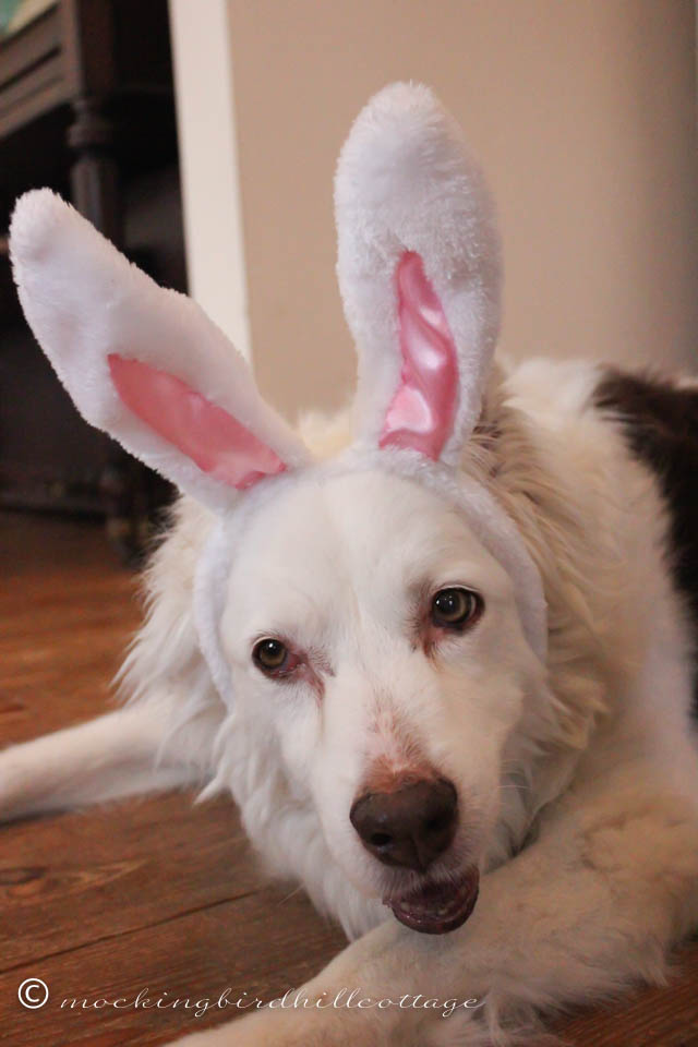4-5 Scoutie Bunny 4