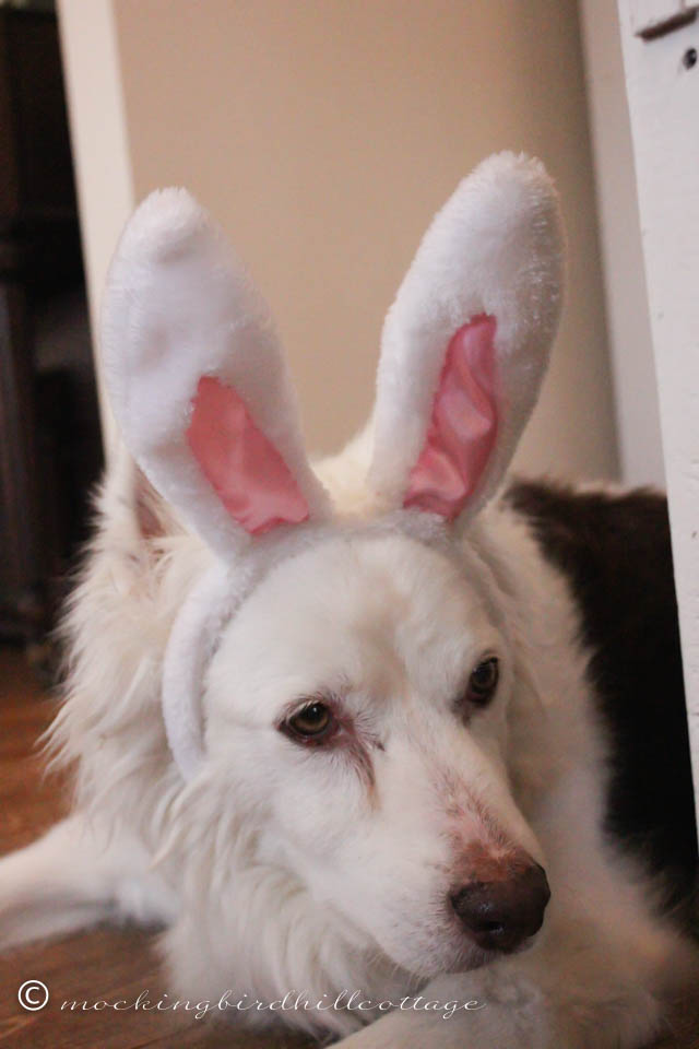 4-5 Scoutie Bunny 5